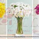 Colorful-Daisies-LolaFlora-600×300 copy