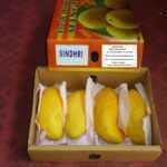pakistani-mango